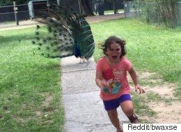 Cette fillette fuyant un paon a inspiré les adeptes de Photoshop