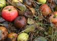 Vi presentiamo 'Riconquista', la campagna HuffPost per porre fine al flagello degli sprechi alimentari