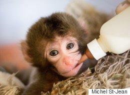 Le zoo de Granby a un nouvel occupant bien mignon (PHOTOS/VIDÉO)