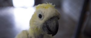 WORLD PARROT REFUGE BC