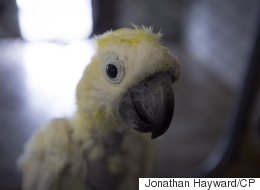 Hundreds Of B.C. Parrots Need Forever Homes