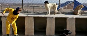 IRAN DOG