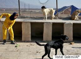 Iran: opération contre des chiens, symboles de «vulgaire culture occidentale»