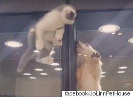 이 고양이는 옆방의 강아지를 사랑했다(동영상)