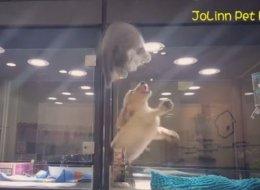 Un chaton s'échappe de son enclos pour aller jouer avec un chiot (VIDÉO)