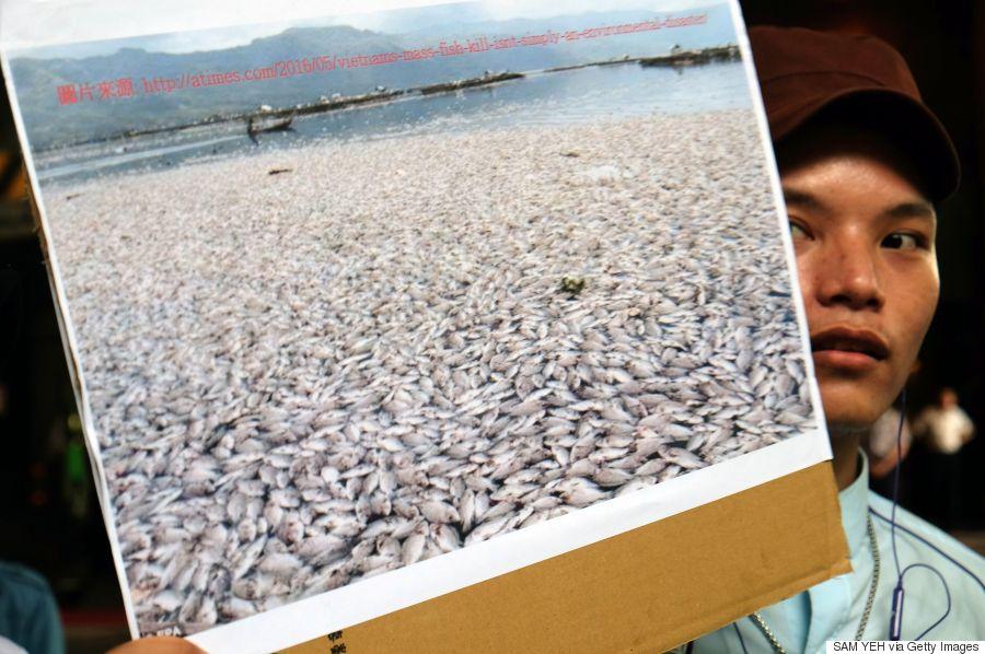 vietnam fish dead