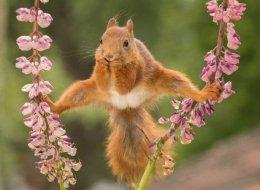 Cet écureuil est à la source d'une bataille de Photoshop