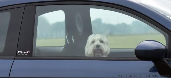 4 cose da fare per salvare un cane (prima di spaccare il finestrino)