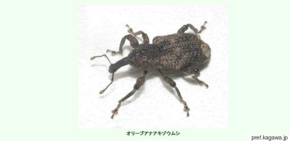 zoumushi