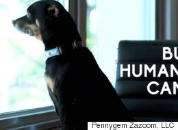 VIDEO: These Human Foods Are Toxic For Our Doggies