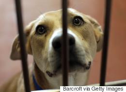 Ottawa rejette un projet de loi privé pour la protection des animaux