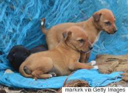 From Space Dumping to Identical Twin Puppies: This Week's Curios