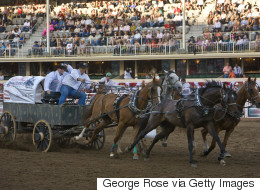 Chuckwagon Safety A Priority At This Year's Calgary Stampede