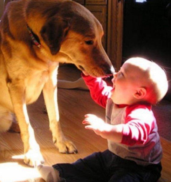baby hund
