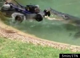 WATCH: Cranky Croc Steals Aussie Zoo Worker's Lawn Mower
