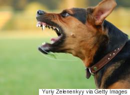 Un chien sans laisse attaque un passant dans Saint-Roch