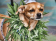 Marijuana Consumption Increases Among Animals As Availability Of The Drug Grows