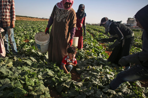 syrian refugees are working in jordan