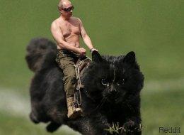Ce chat a déchaîné l'imagination des internautes (et c'est très drôle)