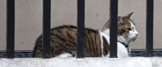 LARRY CAT