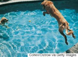 Ces animaux qui s'amusent dans l'eau sont adorables (VIDÉO