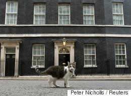 Cameron déménage, Larry le chat reste (VIDÉO)