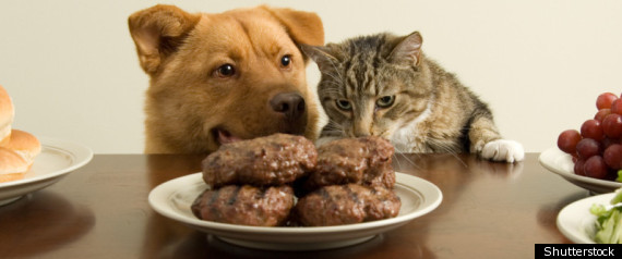 Cat And Dog Burger