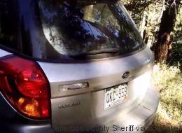 Ces policiers libèrent un ours piégé dans une voiture