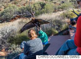 Un aigle essaie d'enlever un enfant pendant un spectacle d'oiseaux