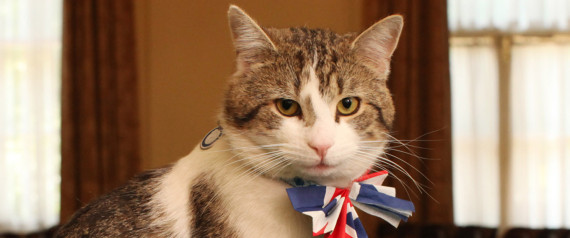 THE DOWNING STREET CAT GETS IN THE ROYAL WEDDING S