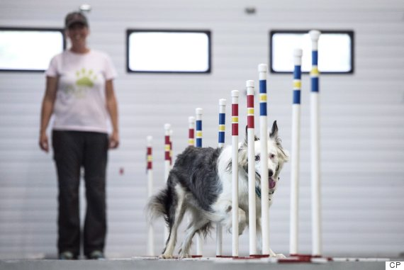 Dog Trainer Course Canada