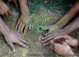 Starkes Zeichen gegen den Klimawandel: Indien pflanzt 50 Millionen Bäume an nur einem Tag