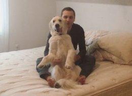 Ce chien a tellement confiance en son maître qu'il ose faire ça...