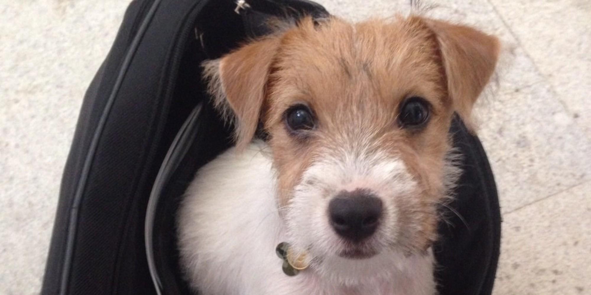 Adottare un cane vi pu cambiare la vita flavia piccinni - Colorazione immagine di un cane ...
