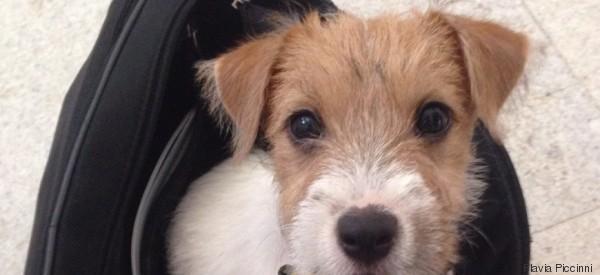 Adottare un cane vi può cambiare la vita