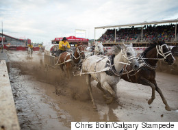 No Animals Were Harmed At This Year's Calgary Stampede