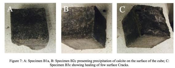 باحث مصري يكتشف بكتيريا تعالج شروخ المباني ذاتياً! O-BA-570