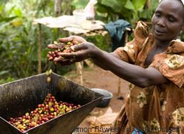 An die Vereinten Nationen: Wir brauchen endlich gerechte Preise für Kaffee und Tee