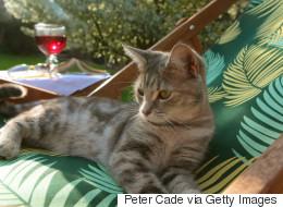7 conseils pour prendre soin de son chat pendant l'été