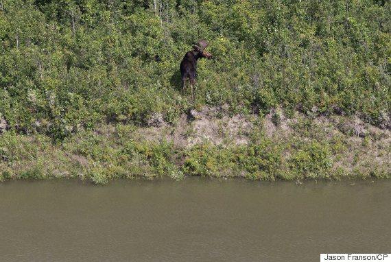 moose oil spill