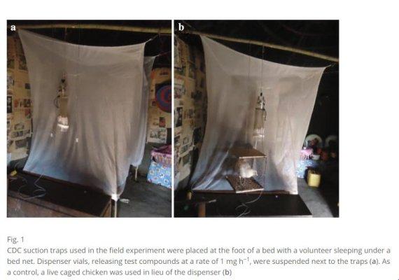 expérience malaria