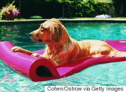 8 choses à savoir sur le coup de chaud et la baignade chez le chien