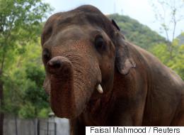 Un éléphant tue une fillette de sept ans dans un zoo