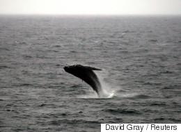 Il se sort vivant d'une collision avec une baleine à bosse