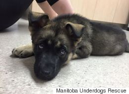 Teen Charged After Puppy Tossed Into The Air To Land On The Ground