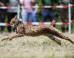 Ces lynx slovaques lâchés en Allemagne vont repeupler les Vosges