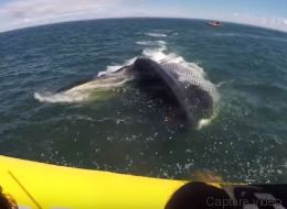 Cette baleine a fait une peur bleue aux touristes de Tadoussac! (VIDÉO)
