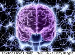 Un cerveau perdu entraîne l'ouverture d'une enquête