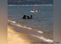 Cet été, cette famille d'ours a décidé d'aller à la plage, comme tout le monde