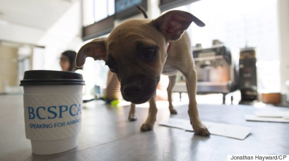 vancouver puppy cafe